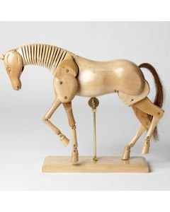 Wooden Anatomical Horse