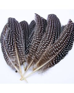 Guinea Hen Feathers Pack
